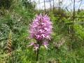 Little men orchid 2